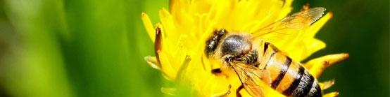 Bienen in der Schädlingsbekämpfung