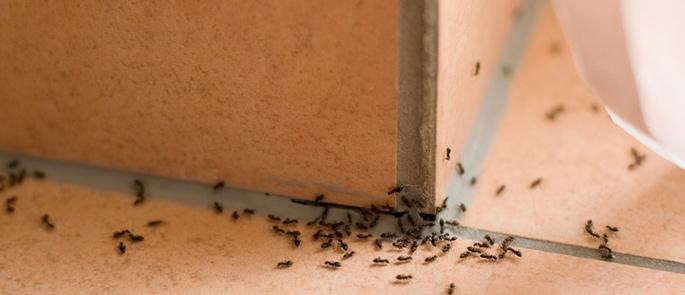 Ameisenbekämpfung in Haus und Garten – Welche Mittel helfen wirklich?
