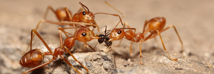 Ameisen Im Wohnzimmer Was Tun : 26 ameisen in der k che bilder ameisen muffins von ~ Lizthompson.info Haus und Dekorationen