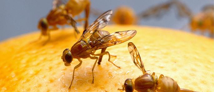 Diese Schädlinge ziehen im Herbst wieder ins Haus ein