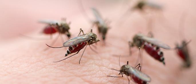 Insektenschutz für die Haut