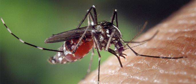 Insektenschutz auf traditionelle Art – was die Großmutter schon wusste