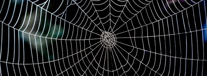 Spinnen als Schädlingsbekämpfer