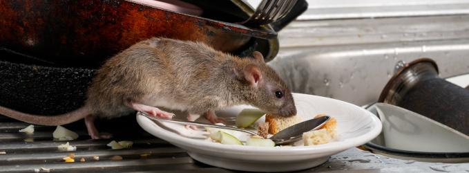 Vorratsschädlinge in Lebensmitteln